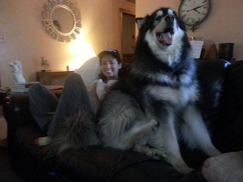 cão grande 3