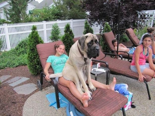 cão grande 9