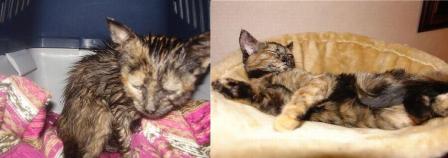 gato resgatado