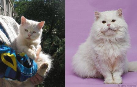 gato resgatado 10