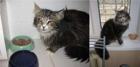 gato resgatado 11