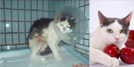 gato resgatado 12