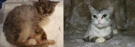 gato resgatado 13