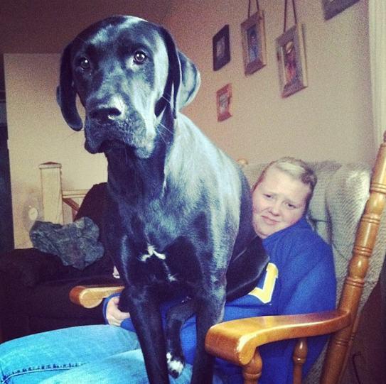 cão grande 8